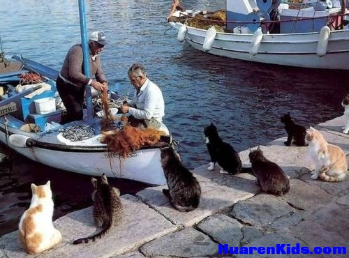 thumbs_cats_at_sea_waiting_for_breakfast.jpg - 一组搞笑的动物图片 - 华人小孩 - HuarenKids