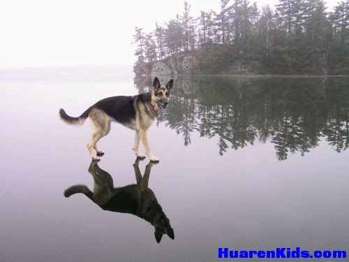 thumbs_jesus_dog_walking_on_the_water.jpg - 一组搞笑的动物图片 - 华人小孩 - HuarenKids