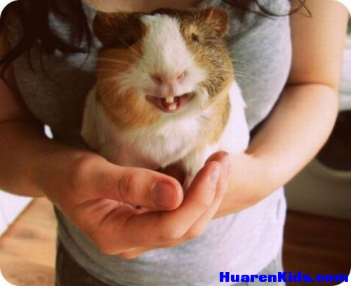 thumbs_hamster_is_happy_pressed_against_the_boobs.jpg - 一组搞笑的动物图片 - 华人小孩 - HuarenKids