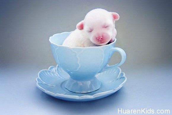 But-my-tea-has-a-puppy-in-it-l.jpg - 超萌的动物睡相,融化你的心! - 华人小孩 - HuarenKids